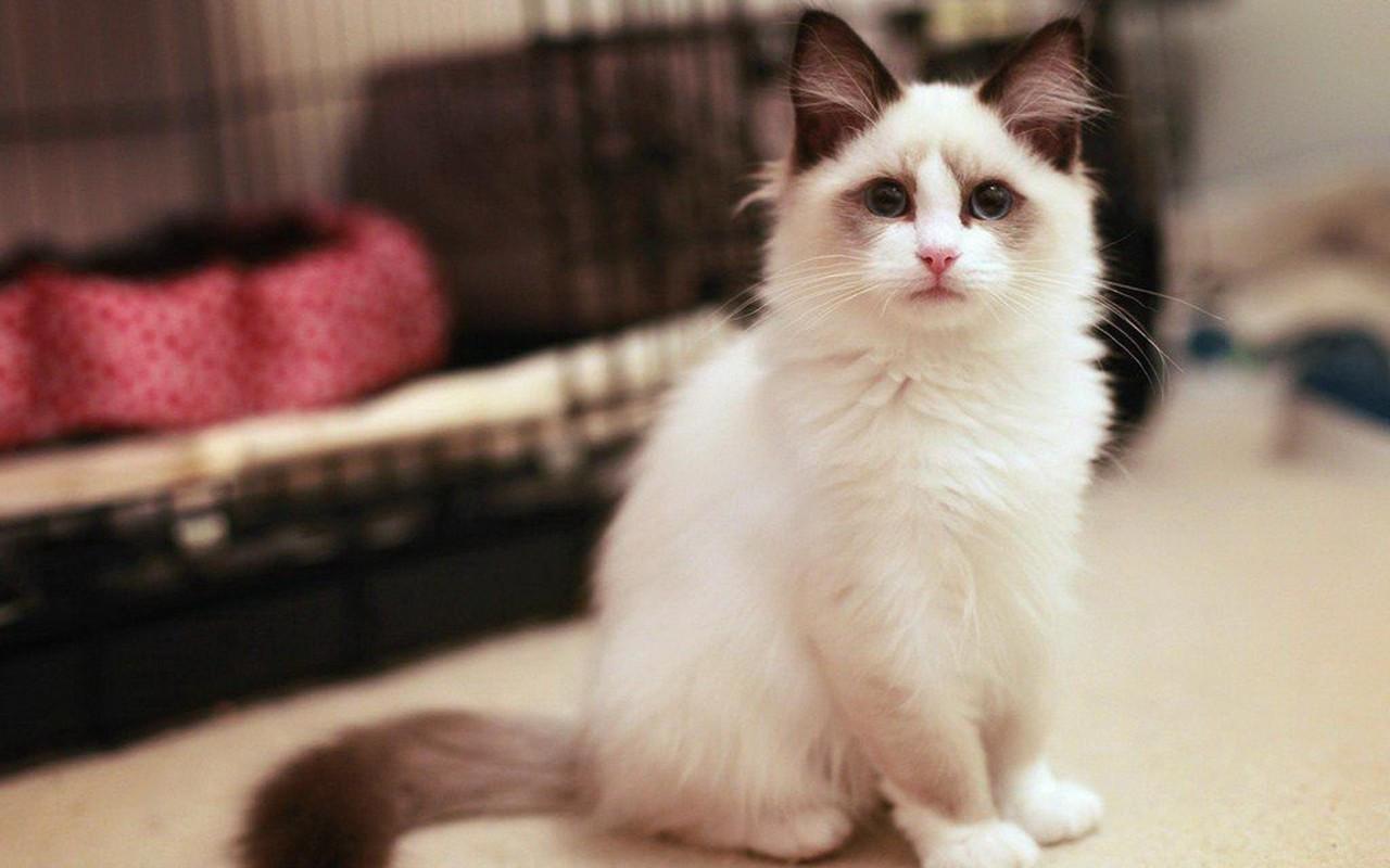 猫咪视频_视频时长 01′06〃,建议在 wifi情况下观看 猫咪头像分享  最近好多