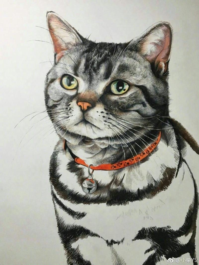 逼真猫咪彩铅手绘画!