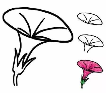 牵牛花植物简笔画