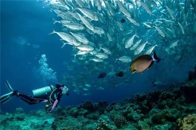 海洋科技,海洋环保题材为主,以及全国乃至世界各地以海为主题的摄影图片