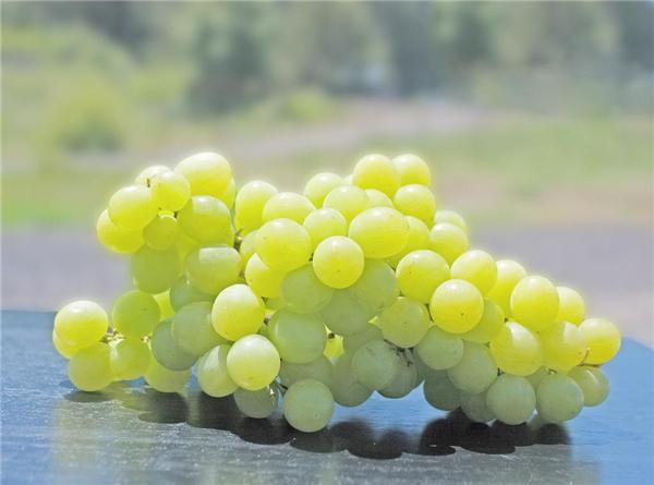 红白绿紫黑,这么多的葡萄你是否挑花了眼?
