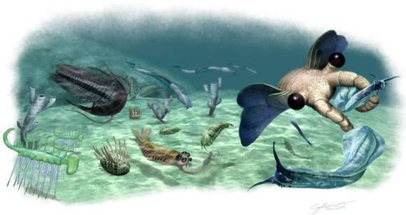 鲁鲁射人和动物_寒武纪的生物以海生无脊椎动物和海生藻类为主