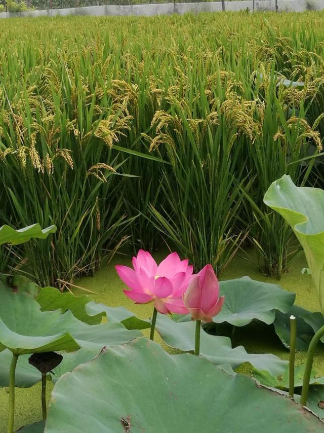 无需门票 9月荥阳这个湿地保护区除了好看、好玩,更有好吃的