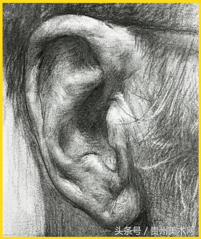 素描头像千万不能忽略关于耳朵的知识点!从全方位解析耳朵的画法_搜狐教育_搜狐网