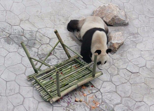 五谷熊猫手工制作大全图片