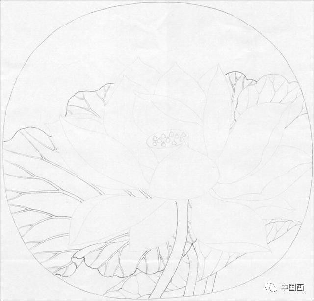 自学工笔画教程系列之临宋画出水芙蓉图 国画荷花和露珠设色步骤