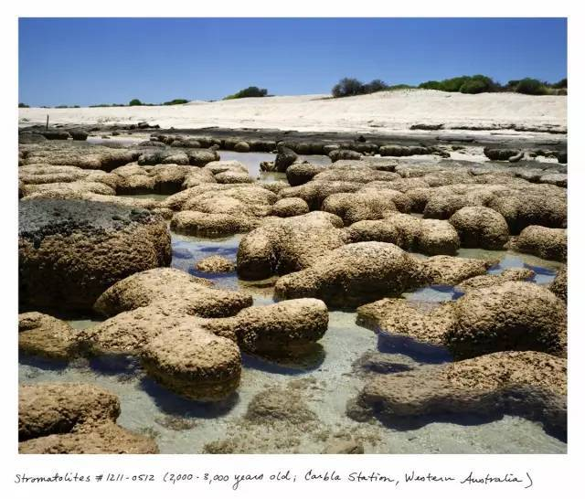 最古老的_澳大利亚最古老的艺术被发现