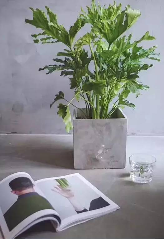 ins网红背景墙植物