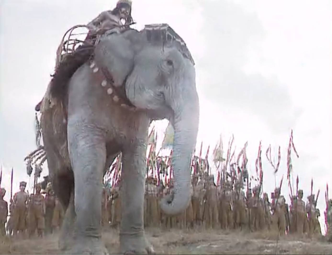 大象是怎样从中国消失的|真问真答