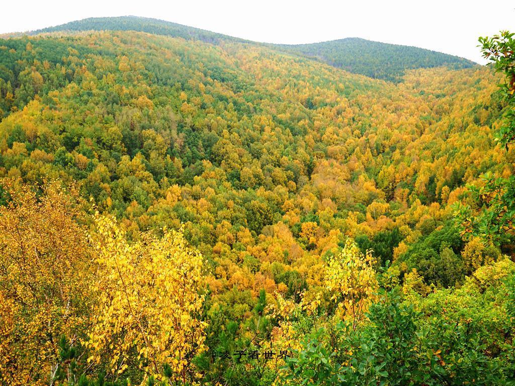 北京周边最美最原始的秋色,就在白草洼森林公园