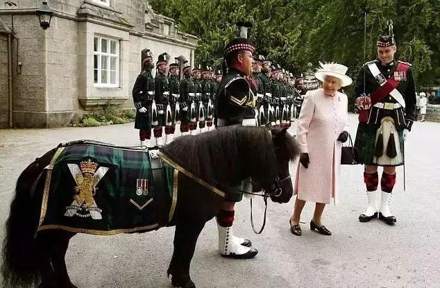 鹦鹉对女王出言不逊,看英军吉祥物待遇如何