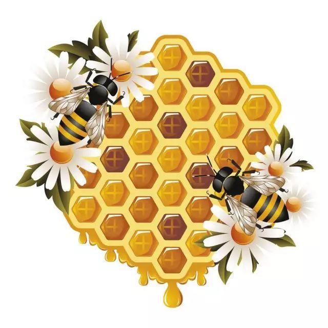 梦幻的初秋季 勤劳的小蜜蜂 也在嗡嗡嗡嗡的采着 花蜜 (图片来源于图片