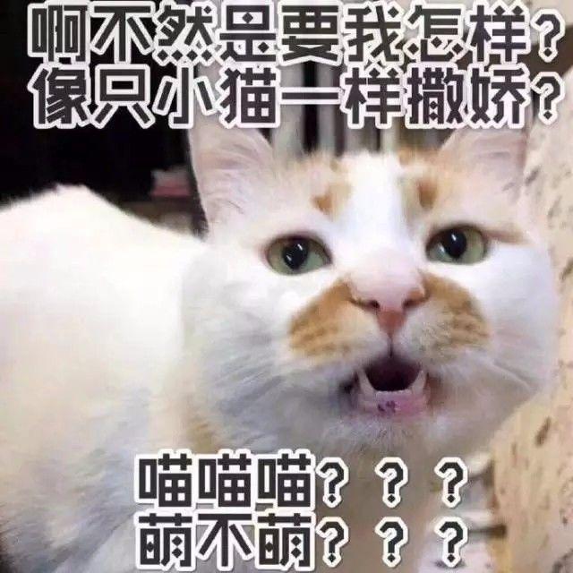 日常吸猫系列表情包,废猫扶不上墙!图片