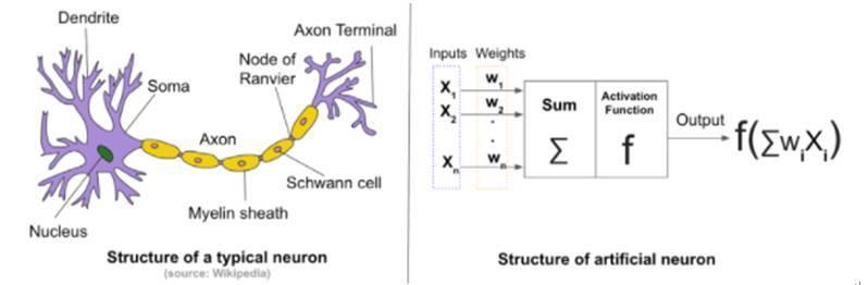 人工神经网络和生物神经网络的比较 IT资讯 第2张