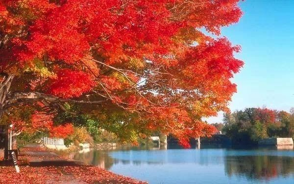 南方有一个省,秋景媲美大西北,关键现在还对全国游客半价了!