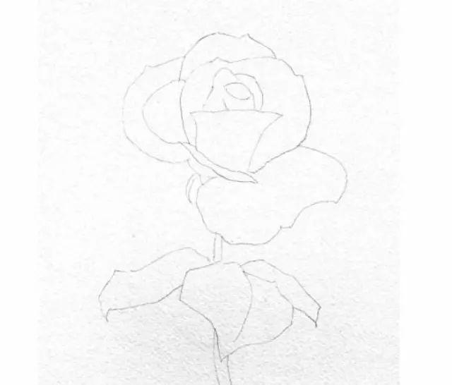 水彩玫瑰花步骤