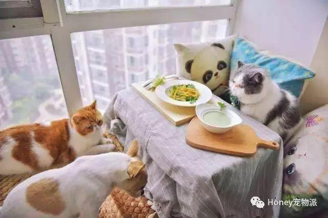 """千亿市场!宠物界""""文娱圈""""!你家爱宠能够本人挣钱养家啦!"""