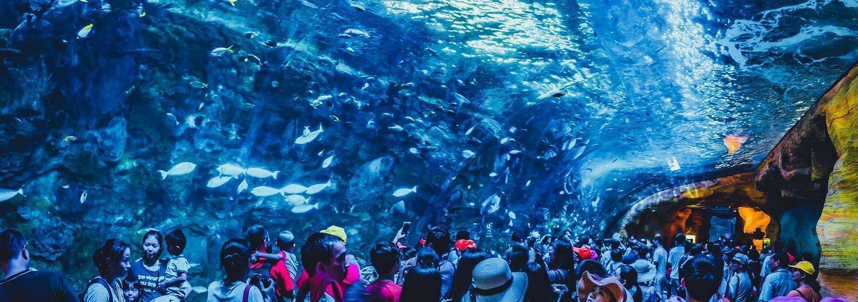 珠海这个海洋王国曾荣获多项吉尼斯记录,非常适合国庆全家人出行