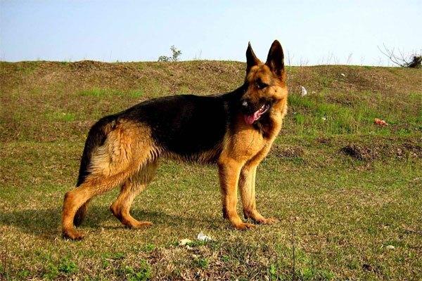 老爸老妈看我的搜狐_一家五人四省户口,竟然还养只德国的狗