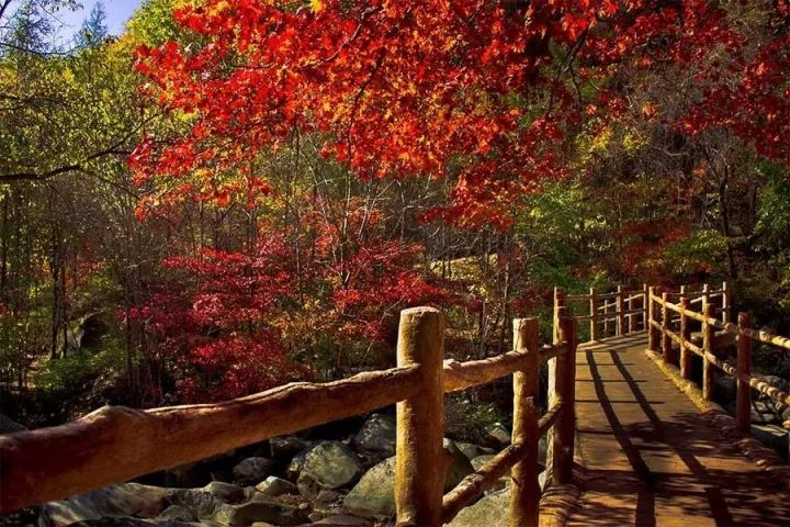 """被称为""""东北318"""",这条秋日绝美高速,一路穿越到中朝边境,美到心醉!"""