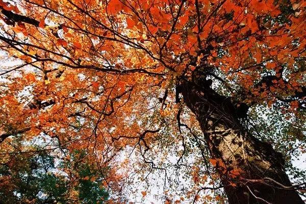 秋天的婺源才叫美,99%的人都去错地方了