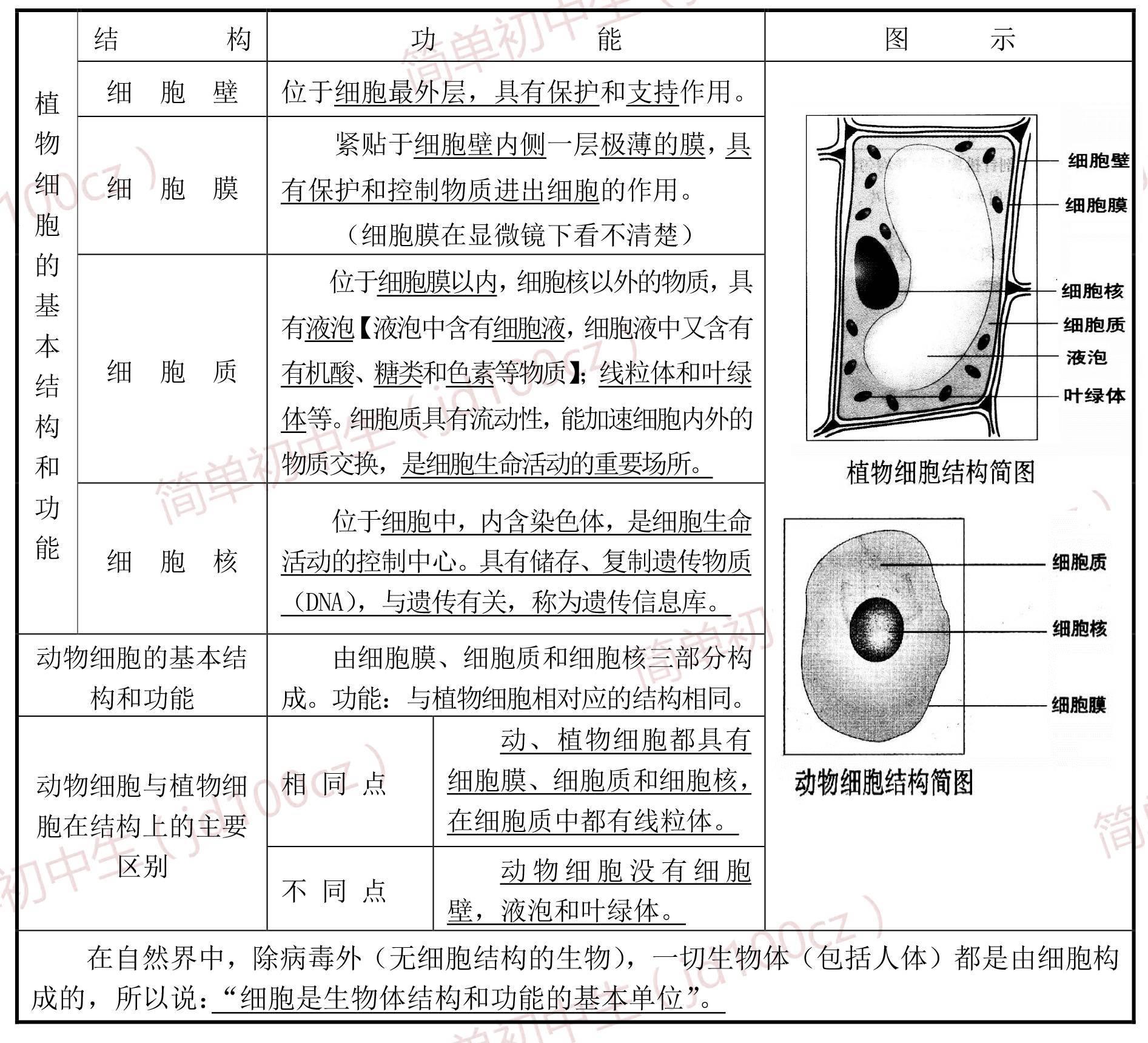 细胞平面图,显示所有细胞器_七上生物显微镜使用及细胞分裂知识点,有图有真相,讲得超清楚!