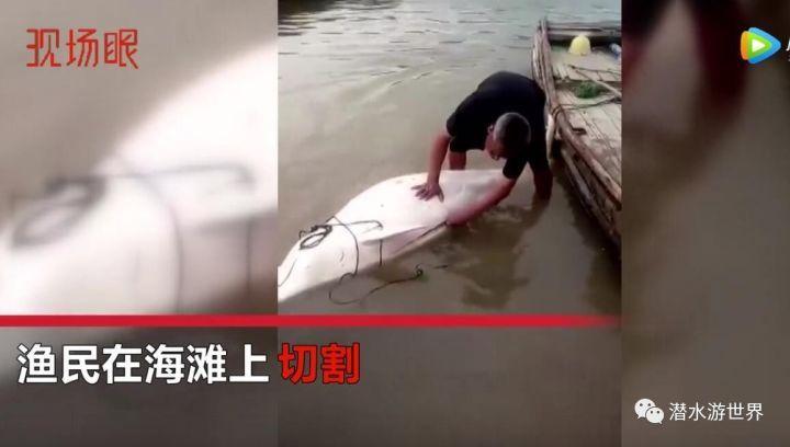 """""""水上大熊猫""""中华白海豚 惨遭渔民开膛破肚"""