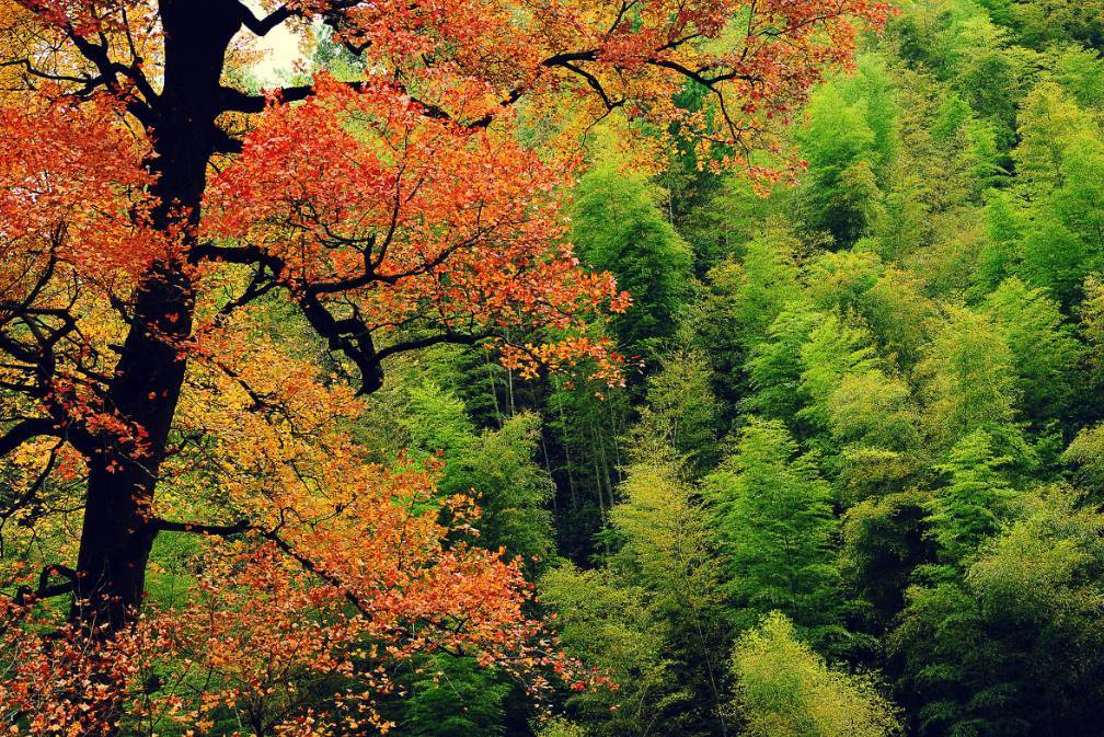 婺源的秋天真能把人美醉!最新最全的赏秋攻略收好~