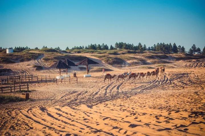 江西竟然也有片沙漠,这是江南的污点,可如今人们却拿沙漠当宝!