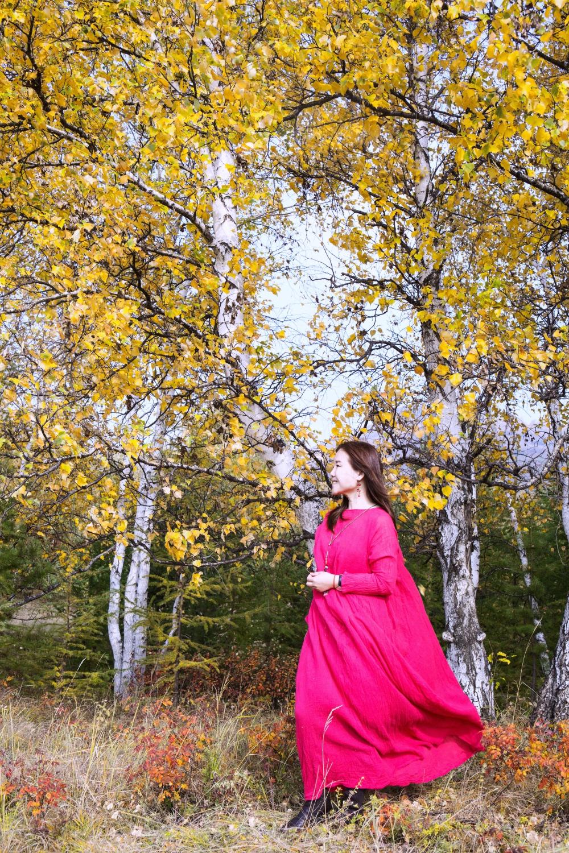 坝上风光,最美白桦林,这个秋天属于乌兰布统