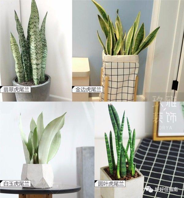 这些植物是北欧风格的绝佳搭配