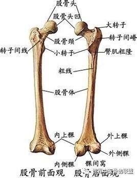一是人体_人生最后一次骨折:股骨颈骨折!