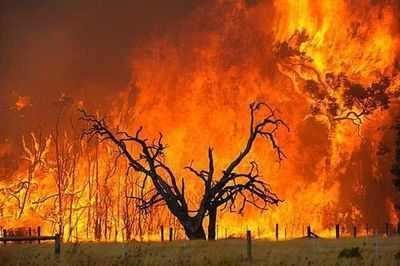 升高摄氏六度,高达百分之九十五的物种灭绝.