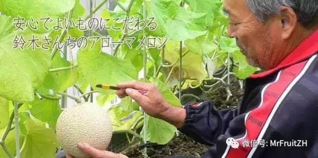 日本|12月10日静冈袋井皇冠哈密瓜马拉松 10月10日截止|蜜瓜届的LV、分分钟吃回报名费