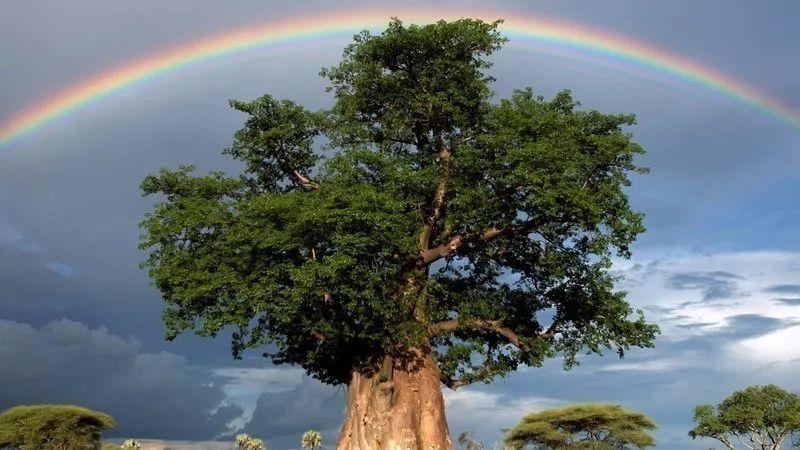 风雨坎坷人生路,不经历风雨怎能见彩虹!