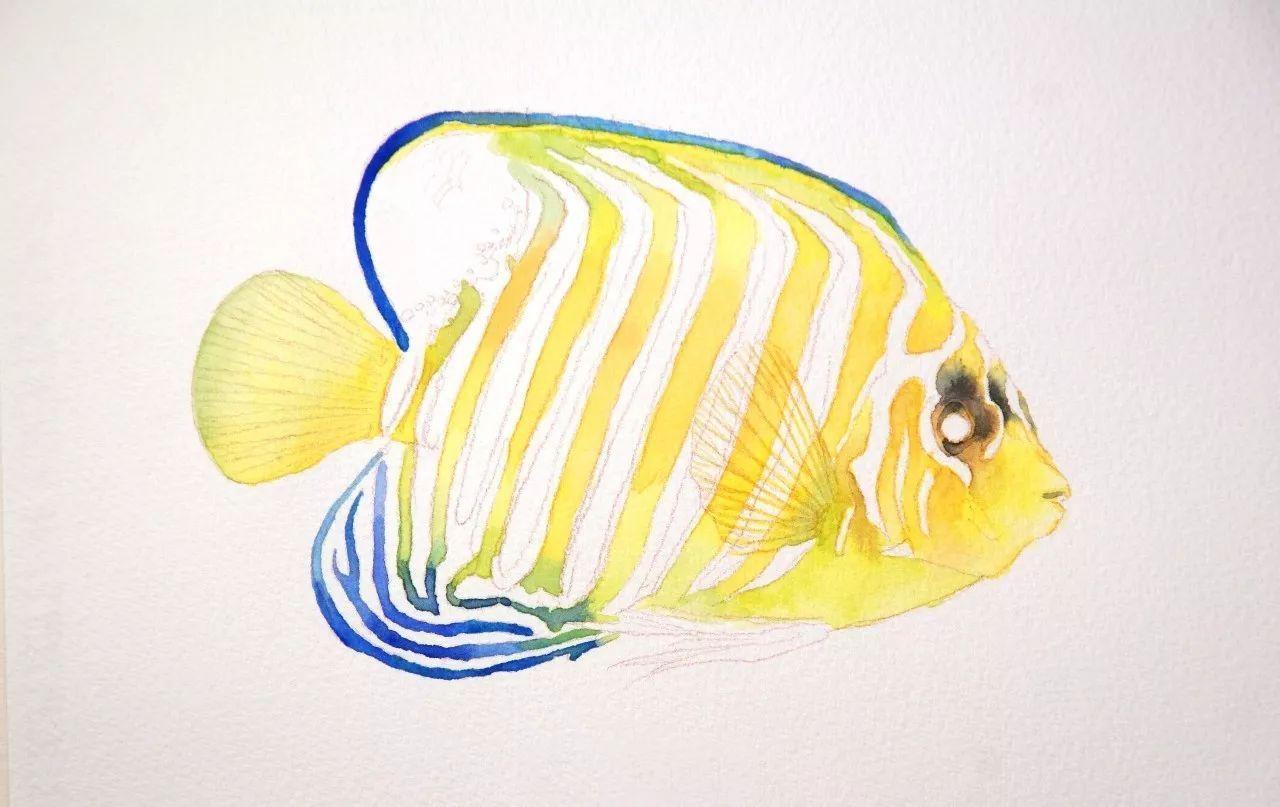 教程 画一条皇帝神仙鱼