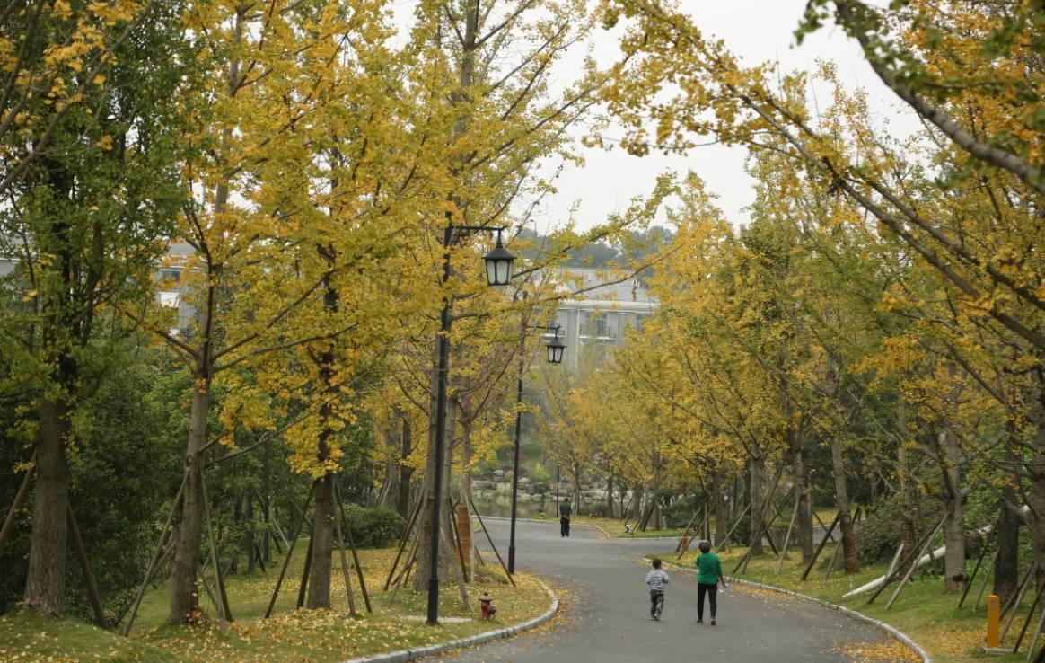 铁山坪森林公园邀您闻香观叶赏美景