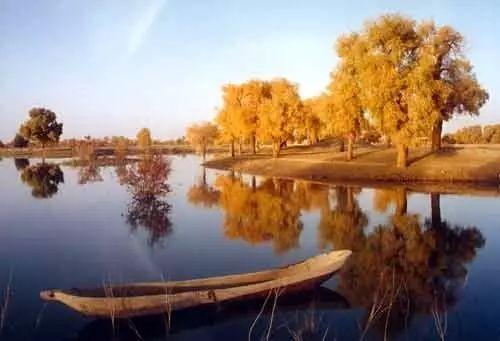 原始胡杨林散布于叶尔羌河中,下游,河曲,河汊蜿蜒其间.图片