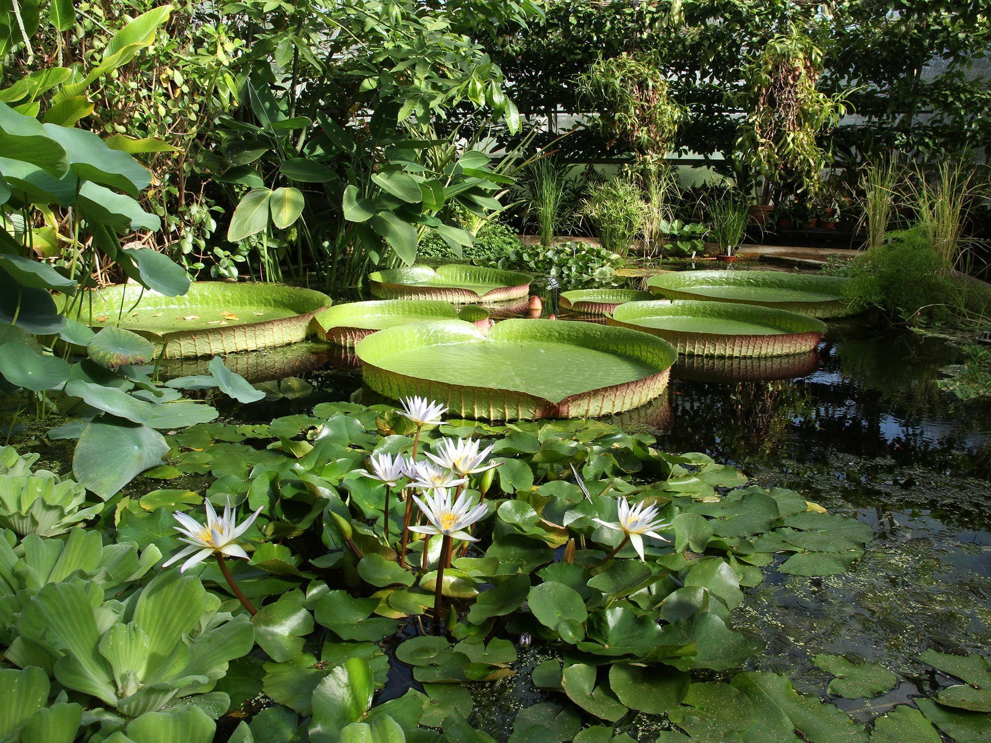 牛津大学植物园(the botanic garden)是英国最古老最经典的植物园