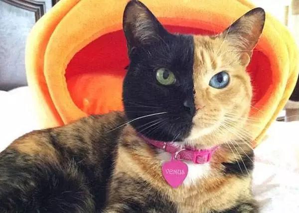 吸猫上瘾,撸猫成魔 浅析猫的互联网性和都市性