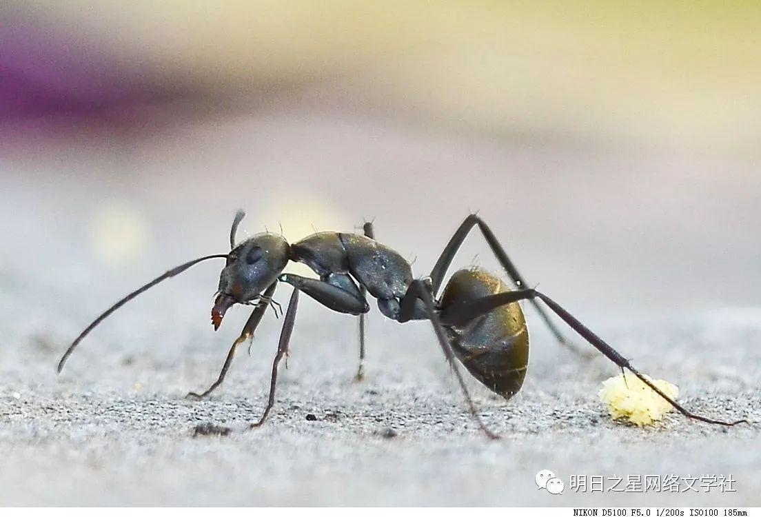 【浙江】陈子涵《 观察蚂蚁》指导老师:徐敏慧