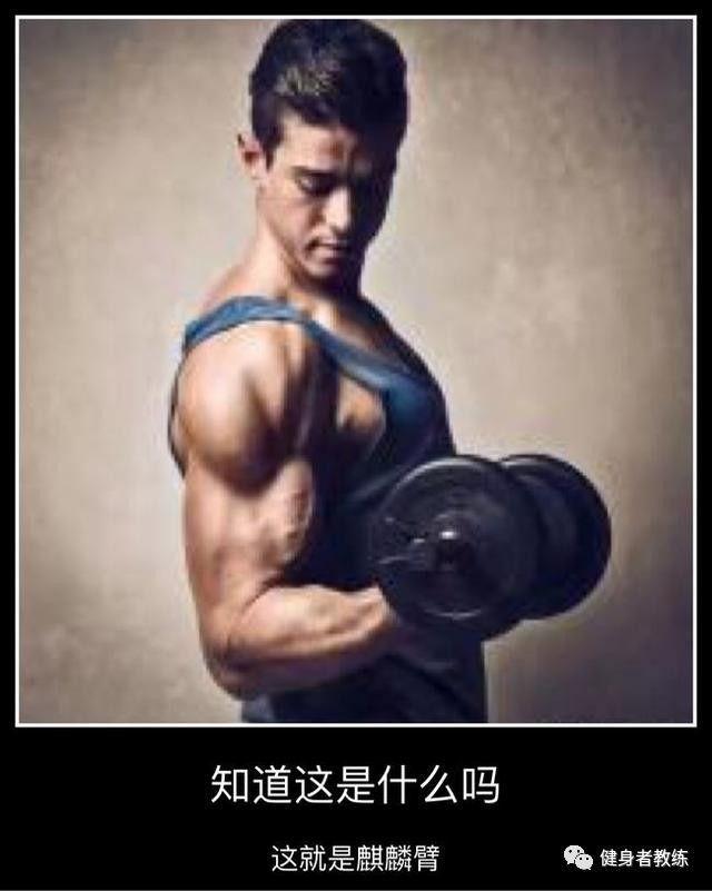 麒麟臂的养成术,5招系统的练就粗壮手臂,增强肌肉战斗力