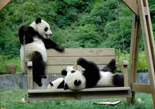 台北动物园 沈阳森林动物园 为这四个小可爱 建设了约1万平的豪华