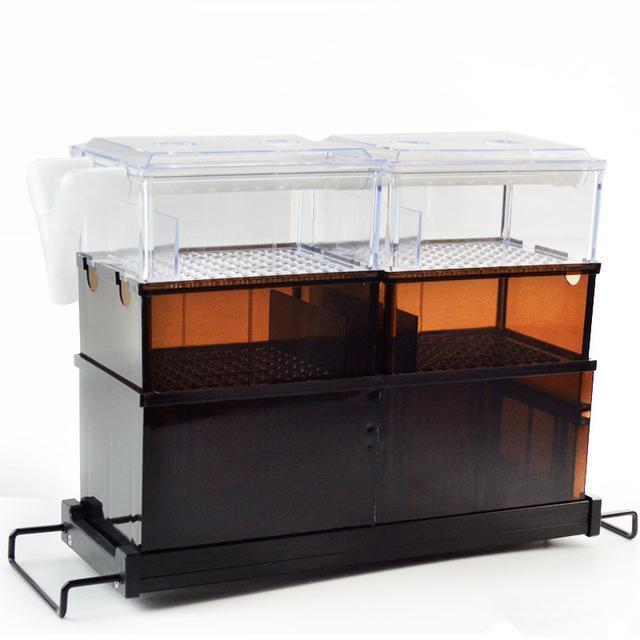 鱼缸杂质藻类多怎么办?教你实用小妙招让鱼缸干净透亮还杀菌