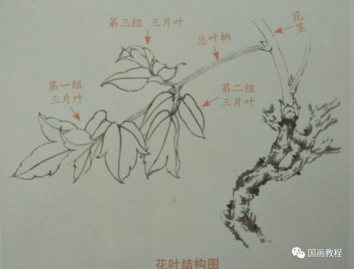 三叶和龙手绘画