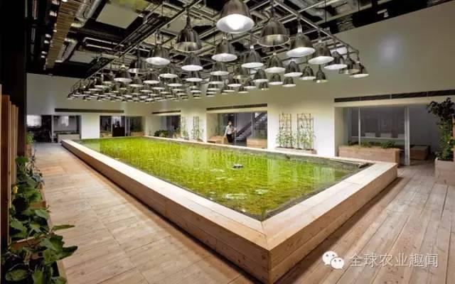 日本城市立体农业,把农场搬进办公室,人在田园中工作!
