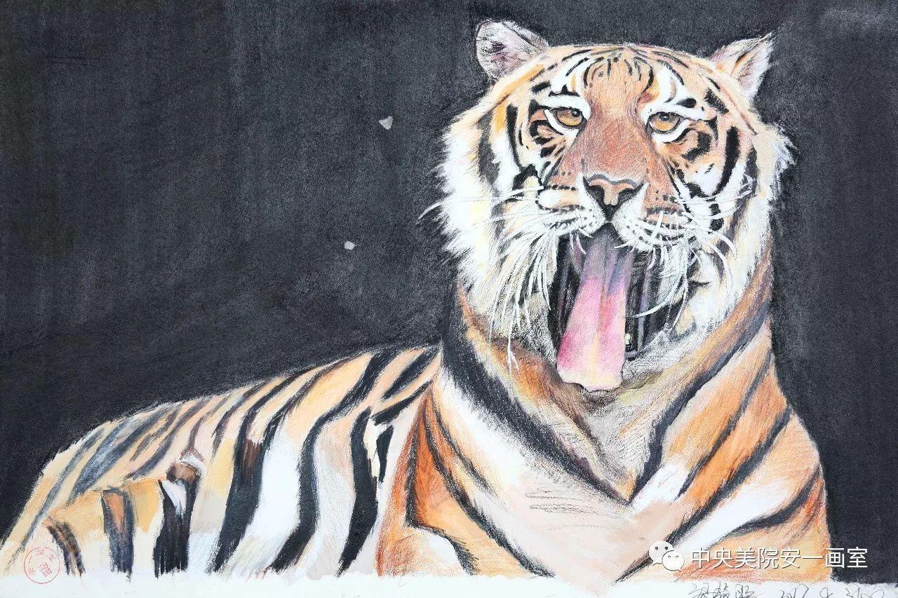 《老虎》/ 彩铅