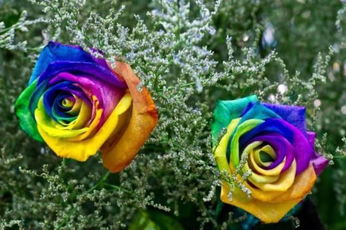 阳光下的七色花