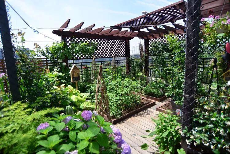 才有了这一年之后 如此惊艳的露台花园 在设计之初,狗子猪对菜园是图片