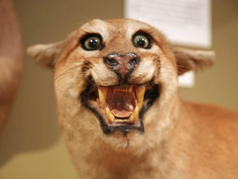 史上最悲催的动物标本:表情千奇百怪